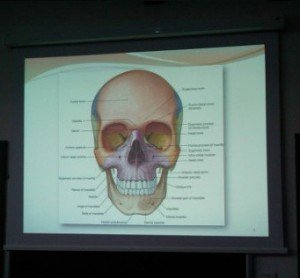 English Medical Schools in Italy: anatomy lesson