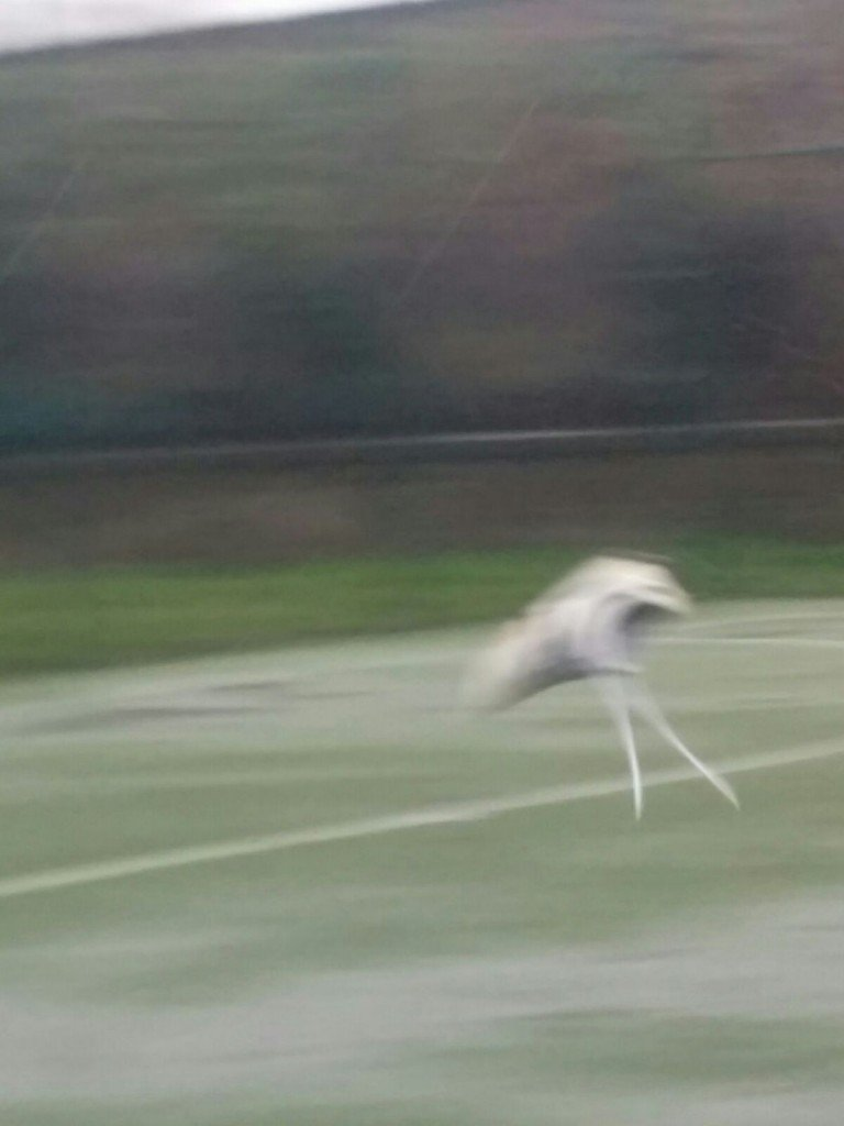 The field was so wet that Mir's shoe slipped off and flew across the pitch