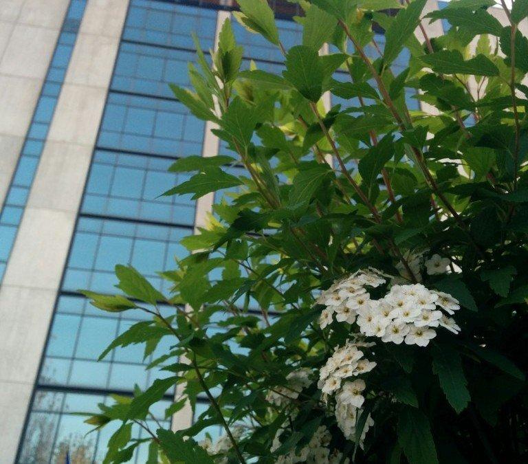 Scenes of Spring at IMS-Milan
